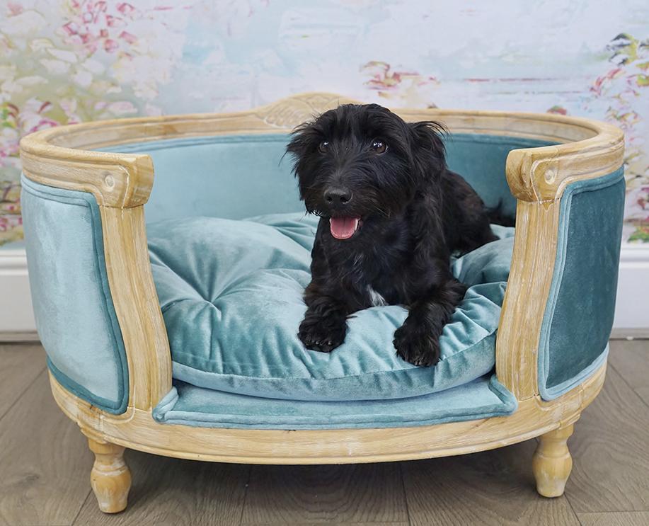 Blue velvet designer dog bed